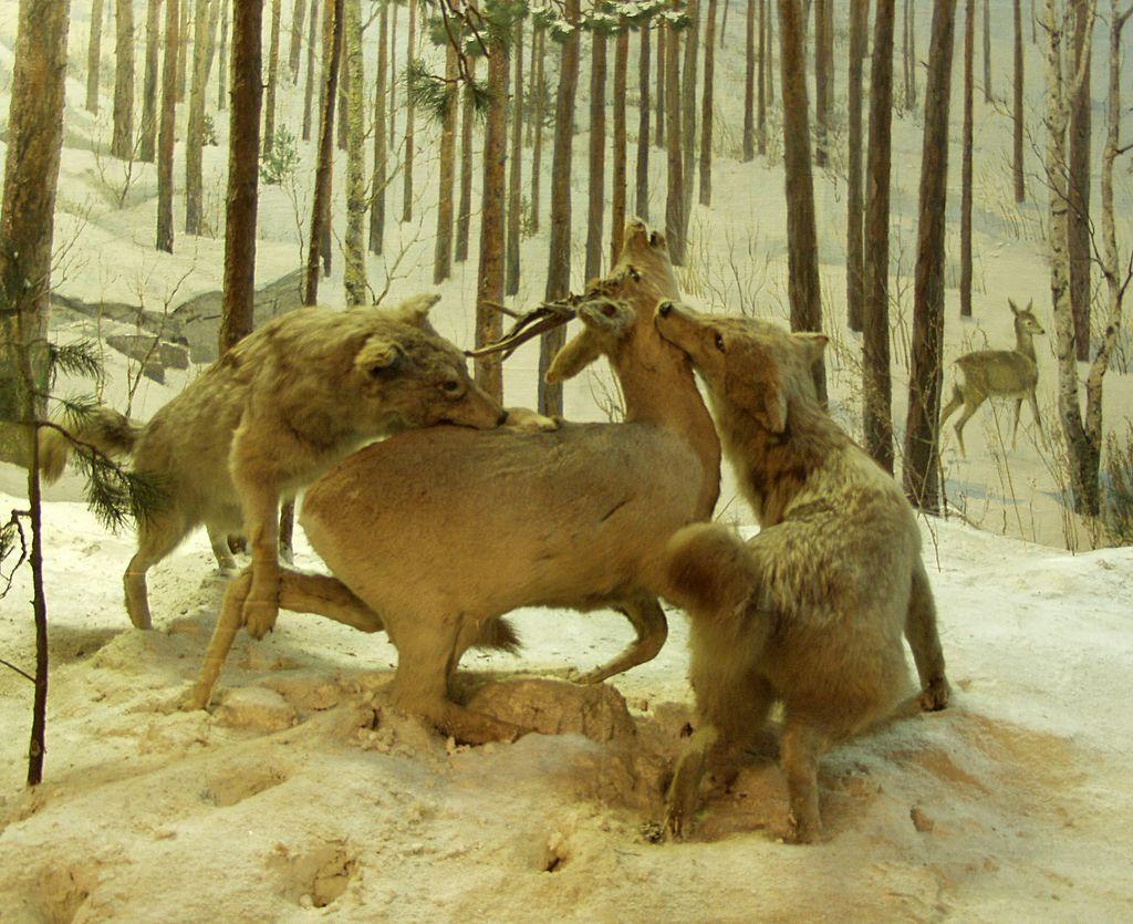 них выходят животные ильменского заповедника фото больше больше